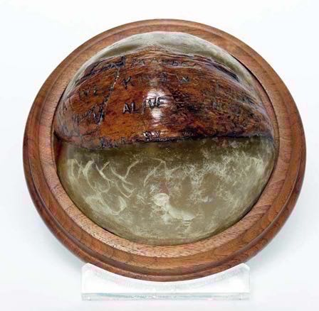 coconut mo 634852.jpg