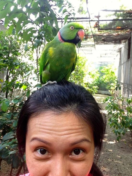 echo parakeet aviary.jpg